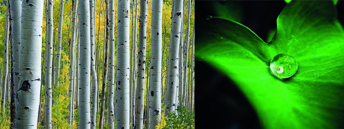 Zie je door de bomen het bos niet...er is altijd een plantaardige oplossing voor een mooie gezonde huid
